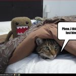 funny-pictures-cat-hides-from-monst