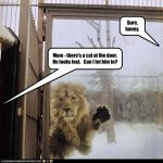 funny-pictures-lion-is-outside
